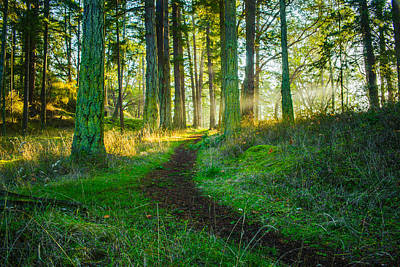 Olympic Sports - Sunlit Autumn Forest - San Juan Island - Washington - October 2013 by Steve G Bisig
