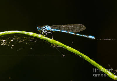 Photograph - Sunlit Blue Beauty by Cheryl Baxter