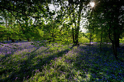 Photograph - Sunlit Bluebells by Gary Eason
