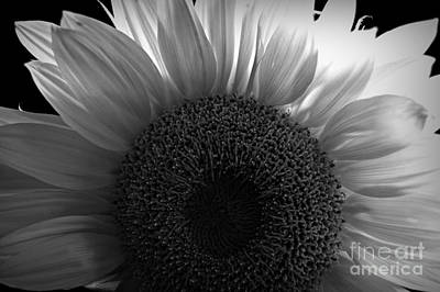 Photograph - Sunlit Bw by Chalet Roome-Rigdon