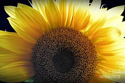 Photograph - Sunlit by Chalet Roome-Rigdon