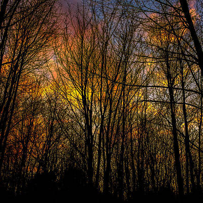 Photograph - Sunlit Clouds Through A Leafless Forest by Chris Bordeleau