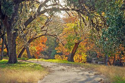 Wimberley Photograph - Sunlit Fall Colors by Robert Anschutz