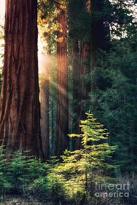 California Yosemite Photograph - Sunlit From Heaven by Jane Rix