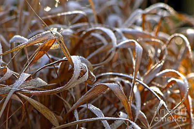 Photograph - Sunlit Frost by Sharon Talson
