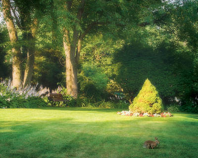 Photograph - Sunlit Greens by Joe Winkler