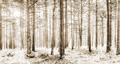 Sunlit Hazy Trees In Neutral Colors Art Print by Natalie Kinnear