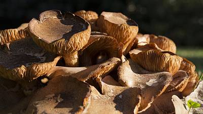 Photograph - Sunlit Mushrooms by MM Anderson