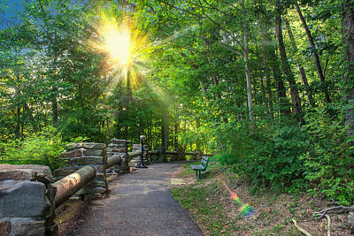 Photograph - Sunlit Path by Mary Almond