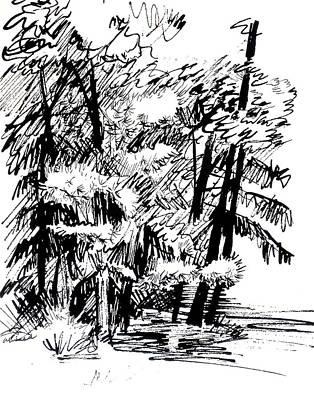 Woodlands Scene Drawing - Sunlit Pines And Hemlocks by Deborah Dendler