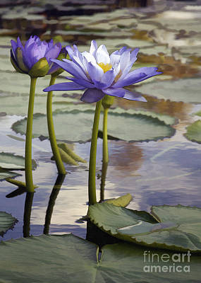 Photograph - Sunlit Purple Lilies  by Sharon Foster