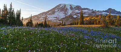 Mount Mazama Photograph - Sunlit Rainier Meadows by Mike Reid