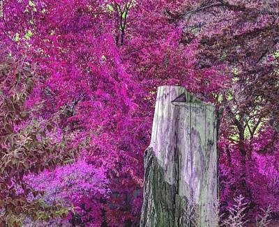 Digital Art - Sunlit Stump Fushia Tones by Aliceann Carlton