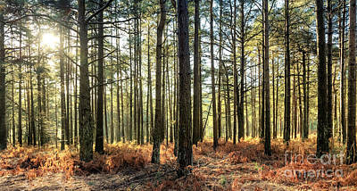 Sunlit Trees On The Ashdown Forest Art Print by Natalie Kinnear
