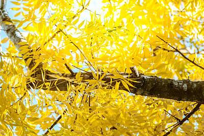 Photograph - Sunlit Yellow Autumn by Melinda Ledsome