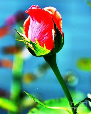 Sunlite Rose Bud Art Print by Judy Palkimas