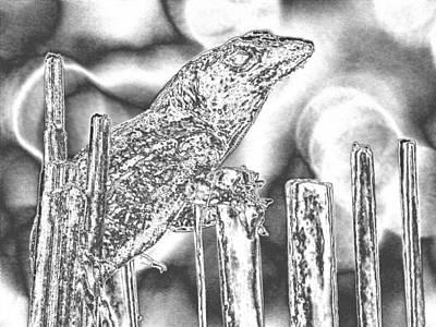 Sunning Lizard Chromed Art Print by Belinda Lee