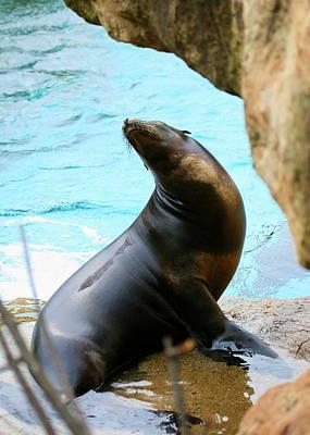 Photograph - Sunning Sea Lion by Angela Rath