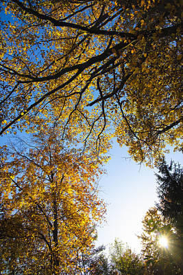 Photograph - Sunny Autumn Day With Golden And Orange Leaves by Matthias Hauser