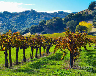 Sunny Autumn Vineyards Art Print by CML Brown