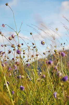 Photograph - Sunny Bliss. Rest And Be Thankful. Scotland by Jenny Rainbow