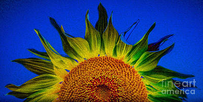 Photograph - Sunny Blue 2 by Michael Arend