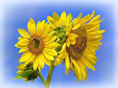Photograph - Sunny Bunch by Carolyn Derstine