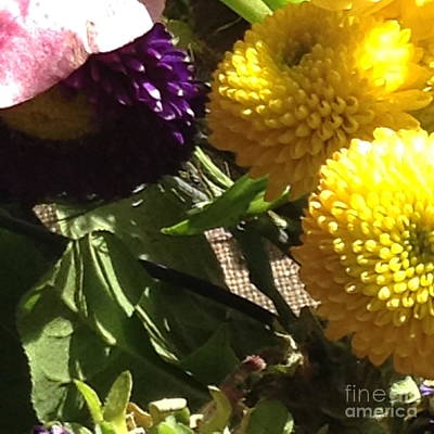 Photograph - Sunny Button Flowers by Susan Townsend