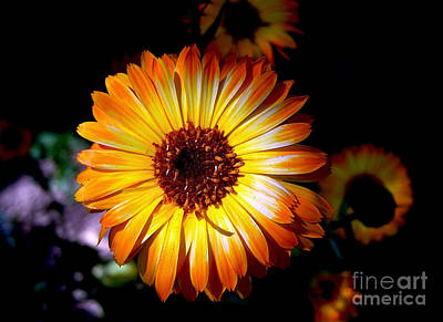 Photograph - Golden Calendula by Nina Ficur Feenan