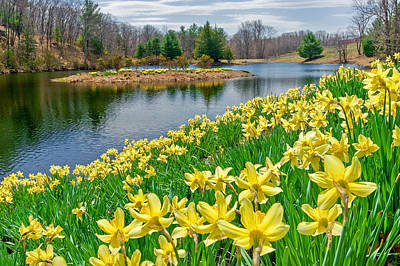 Connecticut Landscape Photograph - Sunny Daffodil by Bill Wakeley