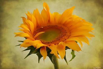 Sunny Art Print by David Simons