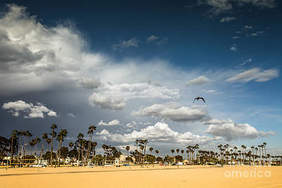Photograph - Sunny Day At The Long Beach With Palm Trees by Sviatlana Kandybovich