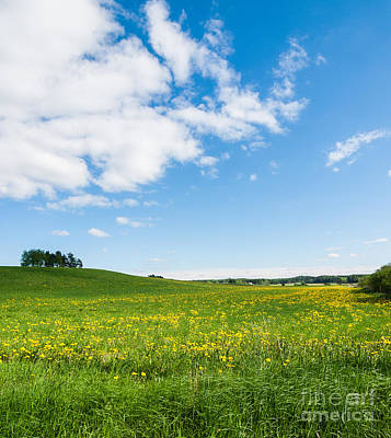 Sunny Day At The Fields Of Gold Art Print