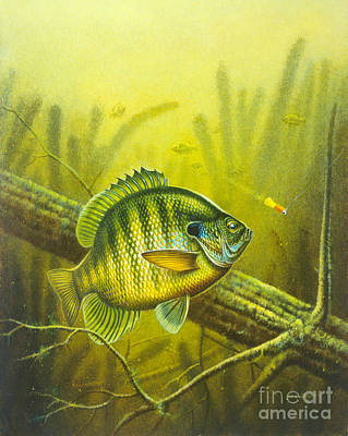 Bluegills Painting - Sunny Day Panfish by JQ Licensing