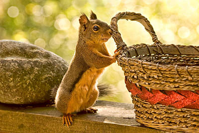 Photograph - Sunny Day Squirrel by Peggy Collins