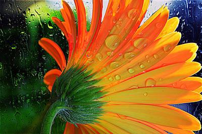 Sunny Days Ahead...... Art Print by Tanya Tanski