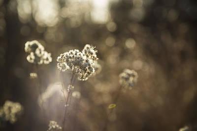 Sacramento Photograph - Sunny Days by Lee Harland