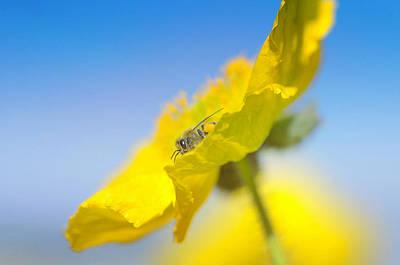 Photograph - Sunny Delight by Fraida Gutovich