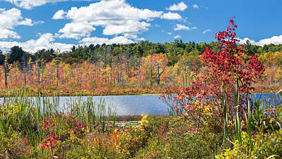 Maple Trees Photograph - Sunny Fall Day by Bill Wakeley