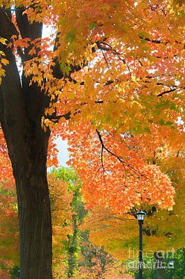 Fall Leaves Photograph - Sunny Fall Day By David Lawrence by David Perry Lawrence