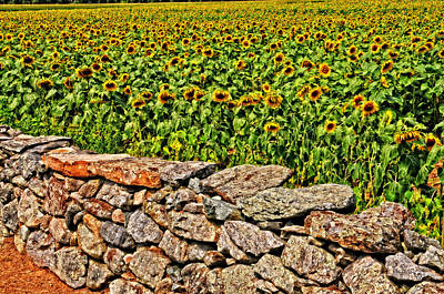 Photograph - Sunny Field Of Flowers by Mike Martin