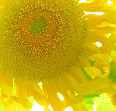 Sunny Flower Art Print by Marcia Nichols