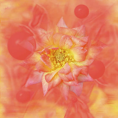 Expressionism Photograph - Sunny Flower Universe by David Wise
