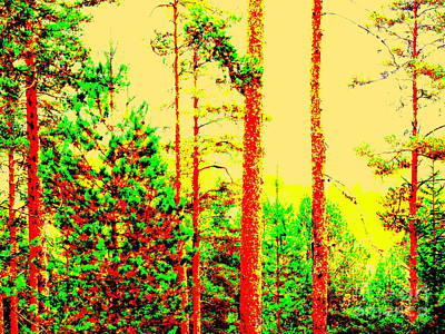 Photograph - Sunny Forest by Pauli Hyvonen