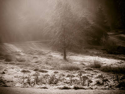 Photograph - Sunny Frosty Douglassville by Trish Tritz