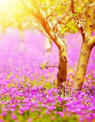 Dreamy Pink Park Scene Photograph - Sunny Fruit Tree Garden by Anna Om