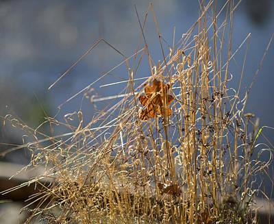 Sunny Grass 2 Original