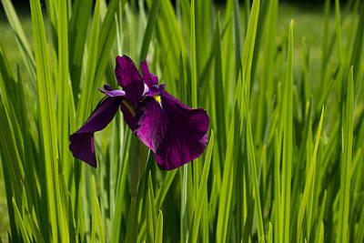 Photograph - Sunny Green And Purple Summer by Georgia Mizuleva