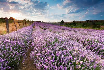 Sunny Lavender Print by Evgeni Dinev