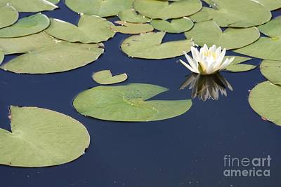 Photograph - Sunny Lily Pond by Carol Groenen